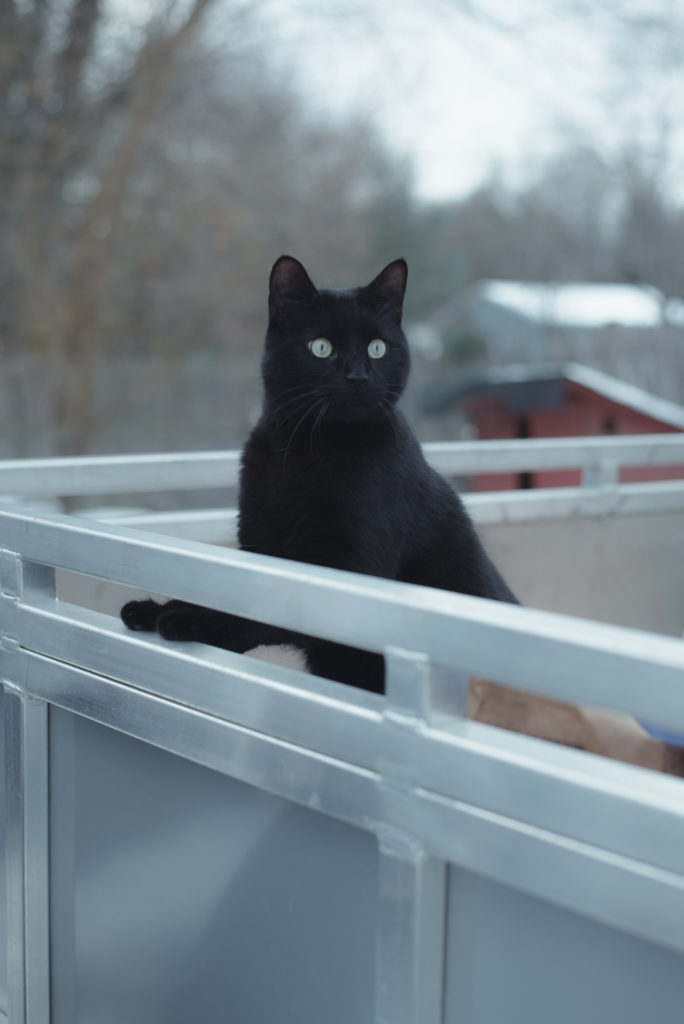 a black cat is perched on a trailer on a cold winter day in bethel, connecticut, photographed by jamie bannon photography.
