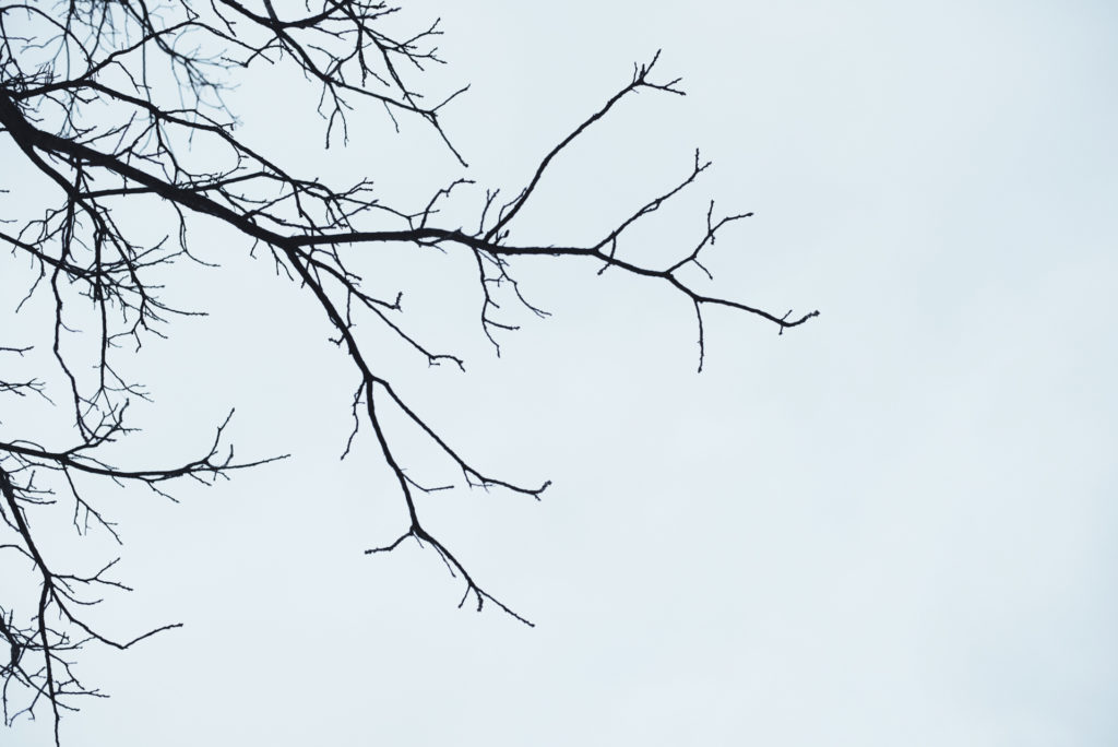bare tree branches against a white, overcast sky on a cold new england winter day, photographed by jamie bannon photography.