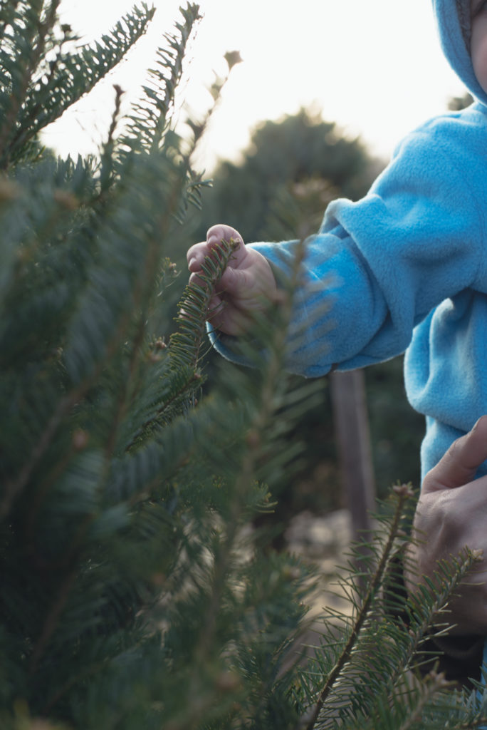 a baby helps pick out his family's first christmas tree at a farm in connecticut, photographed by jamie bannon photography.