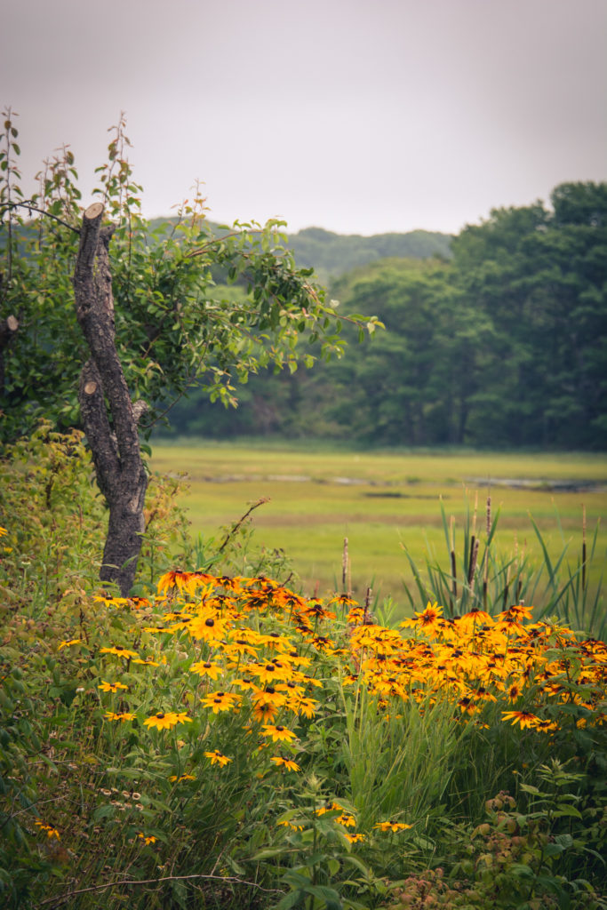 landscape with yellow wildflowers on a rainy day in scarborough, maine, photographed by jamie bannon photography.