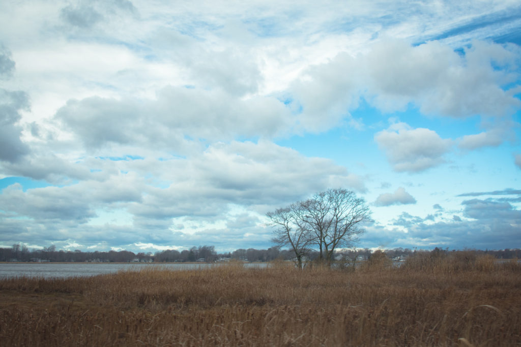 landscape with blue sky and clouds over a field with water and bare winter trees in connecticut, photographed by jamie bannon photography.
