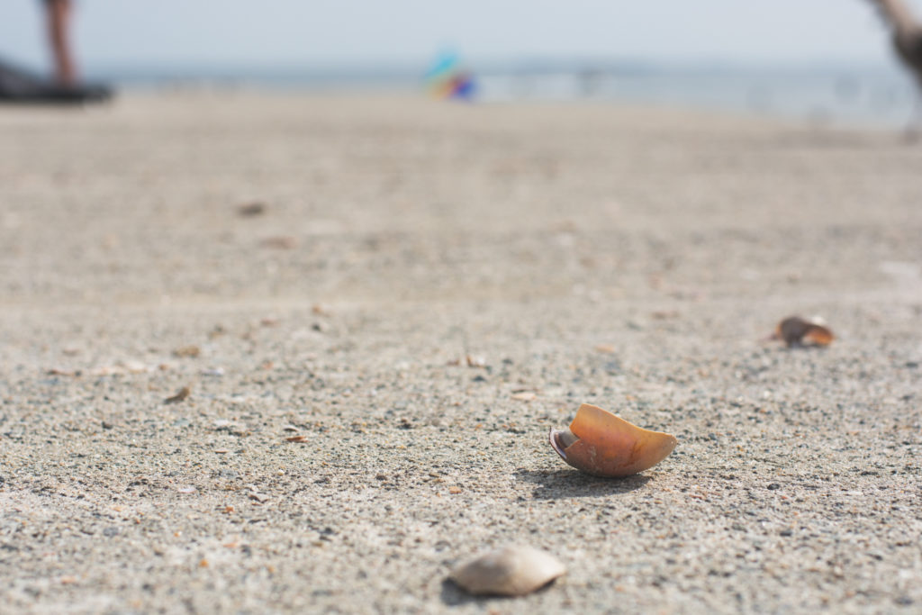 detail of seashells on the beach in niantic, connecticut, photographed by jamie bannon photography.