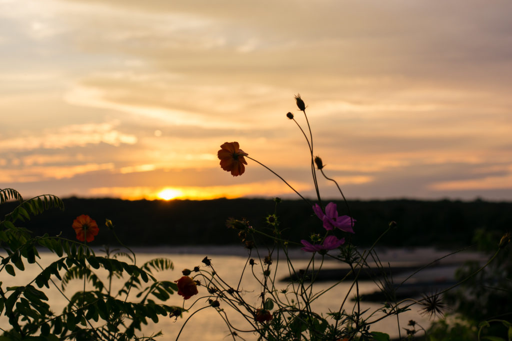small flowers and buds break through the landscape at the connecticut shore at sunset, photographed by jamie bannon photography.