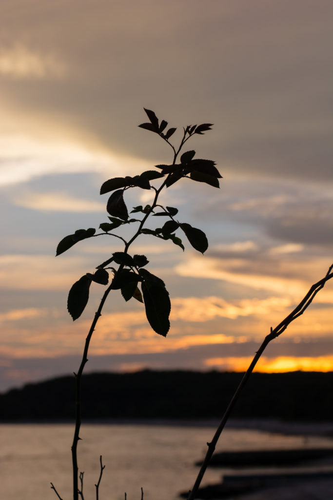 detail of a small plant's silhouette against a sunset sky in niantic, connecticut, photographed by jamie bannon photography.