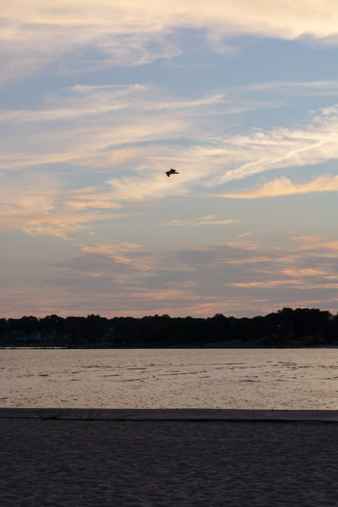 a single bird flies over the water at sunset in niantic, connecticut, photographed by jamie bannon photography.
