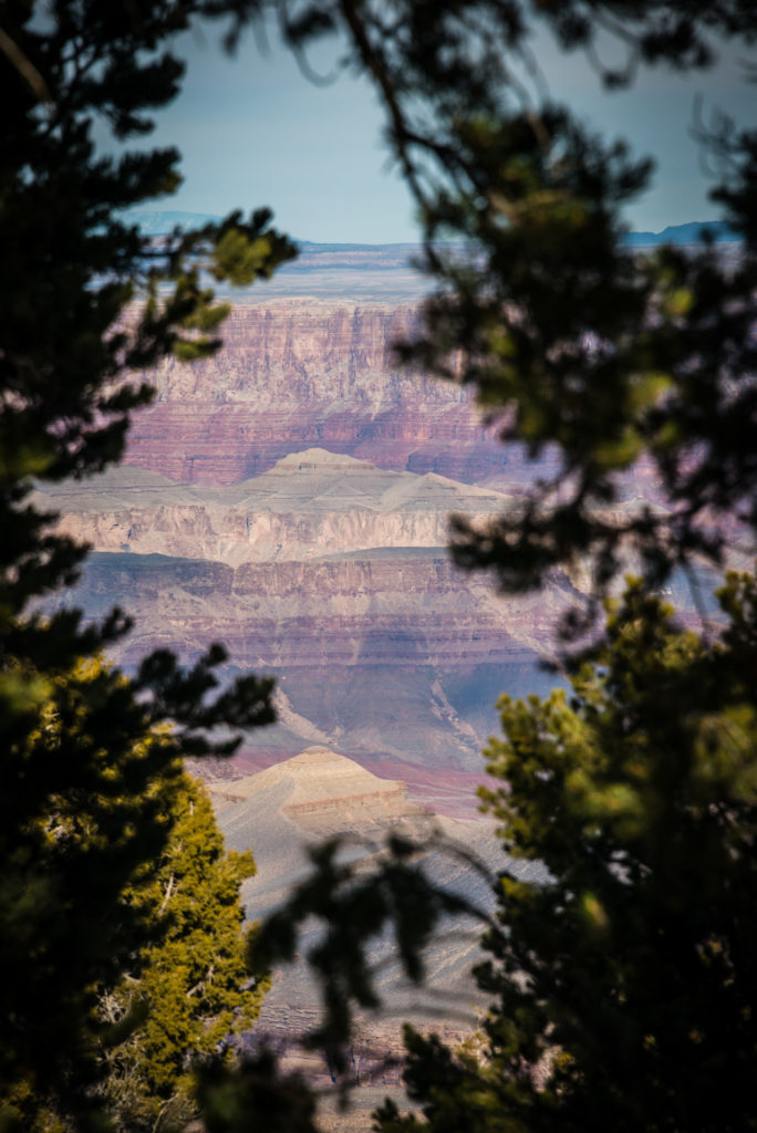 grand canyon landscape through trees, photographed by jamie bannon photography.