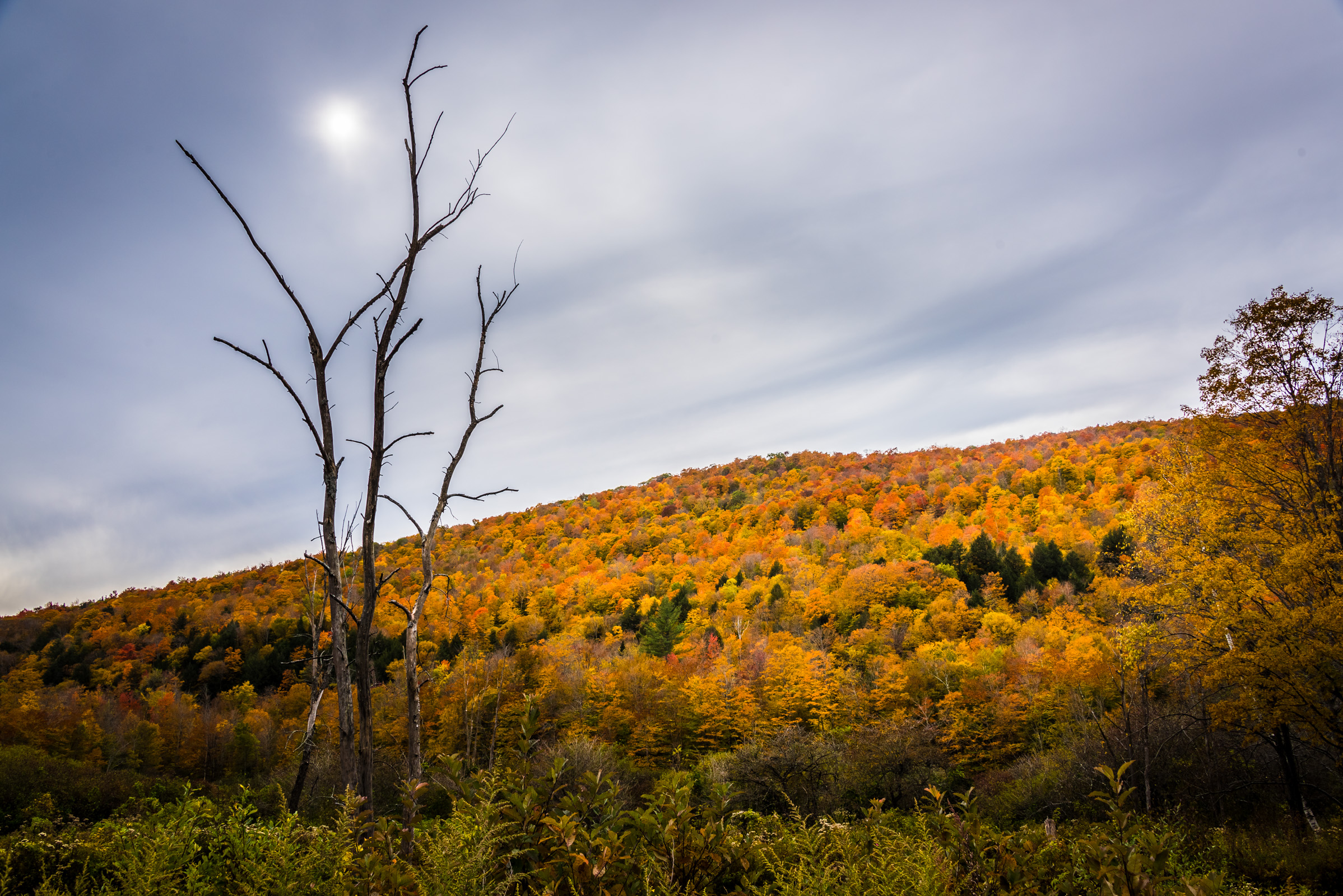 colorful fall foliage in vermont, photographed by jamie bannon photography.