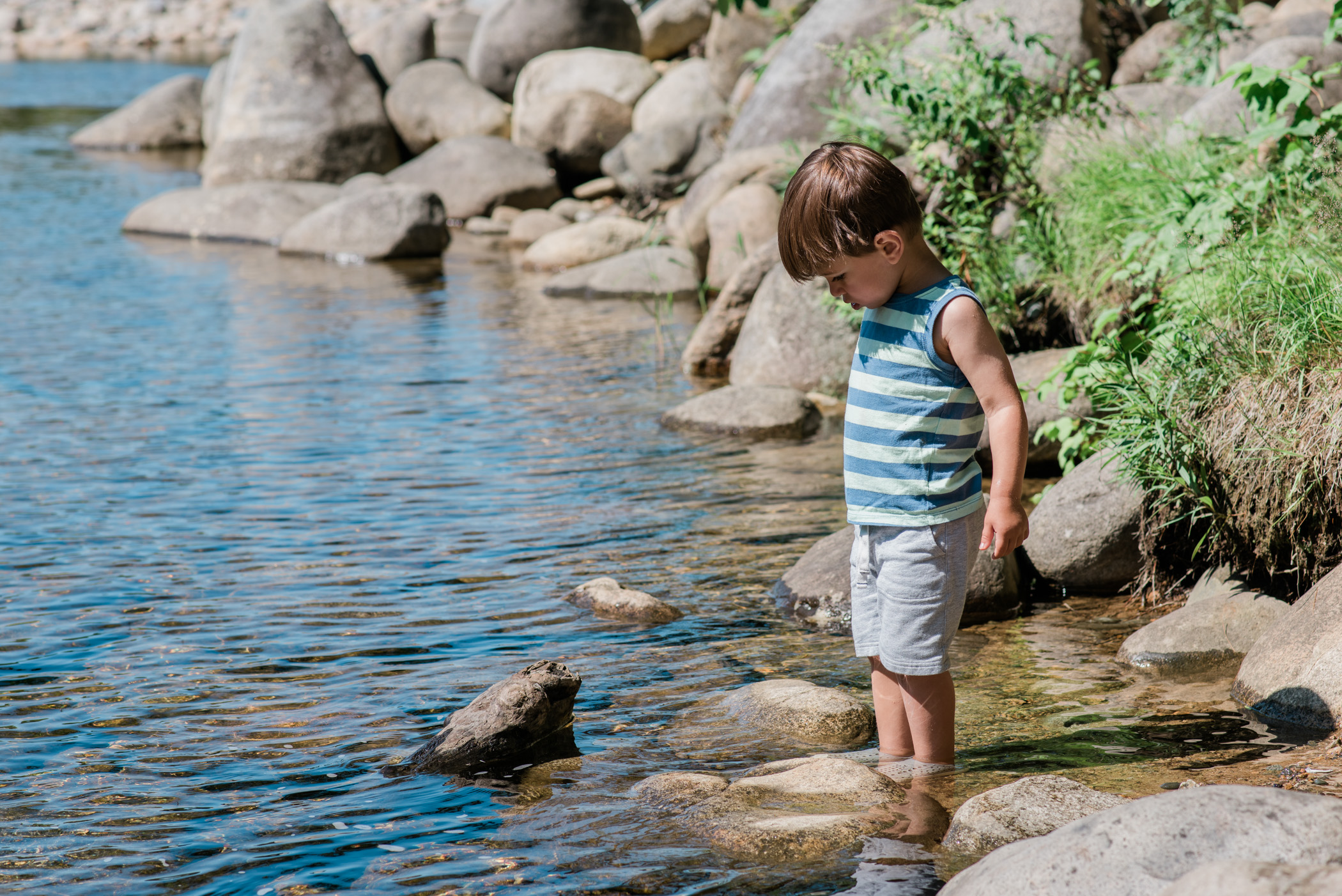 a little boy looks for tadpoles in the pemigewasset river in the white mountains, new hampshire, photographed by jamie bannon photography.